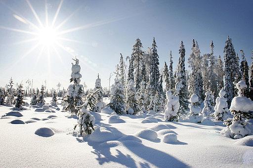 finnland winterurlaub experten buchung f r die sch nsten. Black Bedroom Furniture Sets. Home Design Ideas
