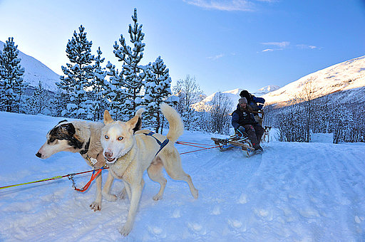 Lyngen Musher GUIDE